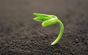 Росток растения