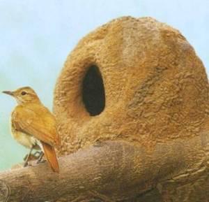 Птичка-печник