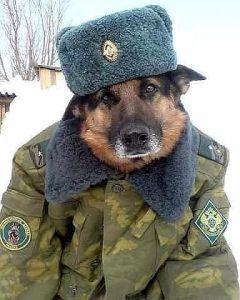 Собака в военной форме