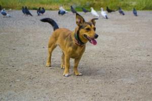 Собака и голуби